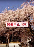 【中止】3/29 慶福寺・釈尊降誕会「しだれ桜観月祭」